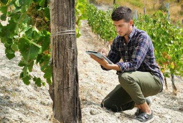 big data viticulture vin numérique